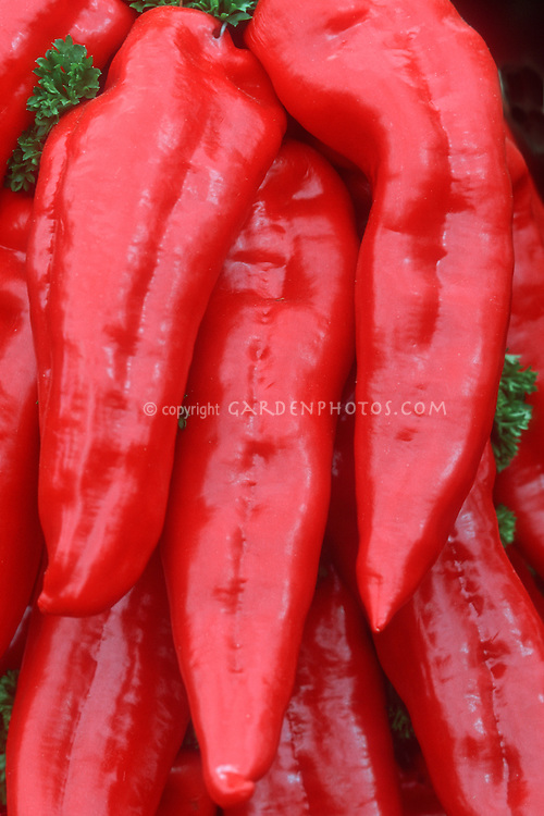 Red Pepper Long Red Marconi Italian heirloom, sweet pepper