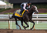 ARCADIA, CA - OCT 31: Arrogate, owned by Juddmonte Farms, Inc. and trained by Bob Baffert, exercises in preparation for the Breeders' Cup Classic at Santa Anita Park on October 31, 2016 in Arcadia, California. (Photo by Douglas DeFelice/Eclipse Sportswire/Breeders Cup)