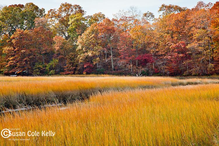 Autumn color on Touisset Marsh in Warren, RI, USA