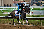 DEL MAR, CA - NOVEMBER 01: Carina Mia, owned by Three Chimneys Farm LLC and trained by Chad C. Brown, exercises in preparation for Breeders' Cup Filly & Mare Sprint at Del Mar Thoroughbred Club on November 1, 2017 in Del Mar, California. (Photo by Jesse Caris/Eclipse Sportswire/Breeders Cup)