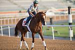 MAR 27,2015:Lea prepare for Dubai World Cup at Meydan in Dubai,UAE. Kazushi Ishida/ESW/CSM