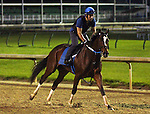 LOUISVILLE, KY - MAY 02: Untapable, 2014 Kentucky Oaks winner, exercises at Churchill Downs, Louisville KY. (Photo by Mary M. Meek/Eclipse Sportswire/Getty Images)