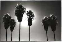Sun behind tall palm trees<br />