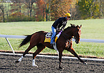 October 29, 2015: Keen Ice, trained by Dale Romans, and owned by Donegal Racing, is entered in the Breeder's Cup Classic.  Candice Chavez/ESW/CSM