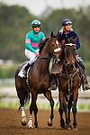 January 09, 2016: Blingo and Alex Solis at the San Pasqual Stakes at Santa Anita Park, Arcadia CA. Evers/ESW/CSM