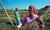 Delhi / India.Contadine al lavoro nei campi alla periferia della capitale indiana..Foto Livio Senigalliesi..Delhi / India.Women working in the fields on the outskirts of the Indian capital..Photo Livio Senigalliesi.