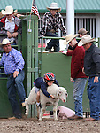 Mutton busting action at the Smackdown at Fuji Park in Carson City, Nev., on Friday, June 5, 2015. <br /> Photo by Cathleen Allison/Nevada Photo Source