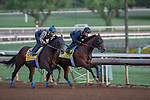 OCT 26 2014:Bayern trained by Bob Baffert, exercises in preparation for the Breeders' Cup Classic at Santa Anita Race Course in Arcadia, California on October 26, 2014. Kazushi Ishida/ESW/CSM