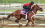 ARCADIA, CA  OCTOBER 29: Mind Your Biscuits galloping on the track at Santa Anita Park, Arcadia, CA on October 29, 2016 (Photo by Casey Phillips/Eclipse Sportswire/Getty Images)