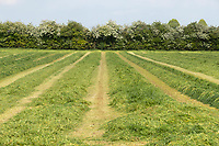 27-5-2021 Grass cut for for silage in Northamptonshire <br /> ©Tim Scrivener Photographer 07850 303986<br />      ....Covering Agriculture In The UK....