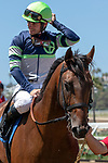DEL MAR, CA  AUGUST 10: #3 Storm the Court, ridden by Flavien Prat return to the connections after winning his debut in a  2 yo maiden race.  (Photo by Casey Phillips/Eclipse Sportswire/CSM)