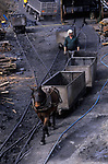Private coal mine pit pony. Nan y Cafin. South Wales. 1990s  UK