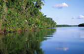 Amazon. Brazil. Thick, dense forested river bank vegetation reflected in the water.