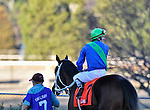 Terry Thompson prepares to ride (7) Native Ruler to victory in the 61st King Cotton Stakes.