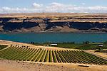 Vineyard near Maryhill, Washington looking across Columbia River toward Oregon.