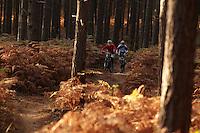 Swinley Forest , Bracknell , Berks    October 2011 pic copyright Steve Behr / Stockfile