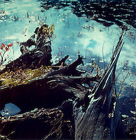 Felled trees by water's edge<br />