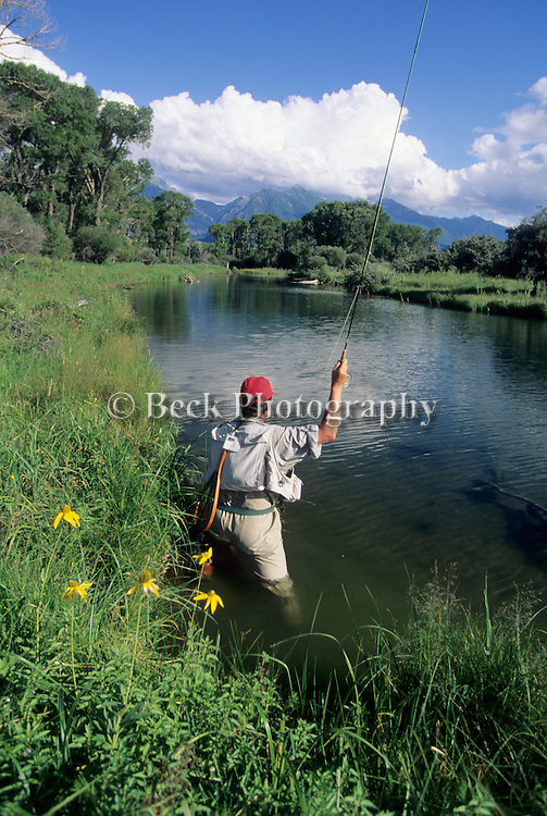 Fly fishing on Depuy's Spring Creek, Montana.
