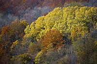 Europe/France/Rhône-Alpes/01/Ain/ Chézery-Forens: Automne dans la forêt sur les monts du Jura