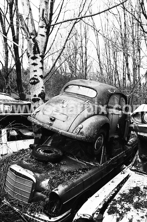 **ALL ROUND PICTURES FROM SOLARPIX.COM**.**SYNDICATION RIGHTS FOR UK AND SPAIN ONLY**. The Swiss town Kaufdorf is a car scrap yard  from 1930 until the 1970 cars were put in and left to Nature. Authorities want to remove these wrecks. A sponsoring society for this car cemetery tries to maintain this Park. ..JOB REF:6997-CPR/Markus Forte        DATE:09_08_08.**MUST CREDIT SOLARPIX.COM OR DOUBLE FEE WILL BE CHARGED* *UNDER NO CIRCUMSTANCES IS THIS IMAGE TO BE REPRODUCED FOR ANY ONLINE EDITION WITHOUT PRIOR PERMISSION*