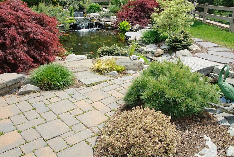Weigela My Monet and Pinus mugo mounding evergreen shrub & stone patio & water garden