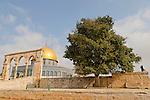 T-069 Mediterranean Hackberry on Temple Mount