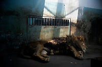 Small Concrete Boxes: China's Zoos