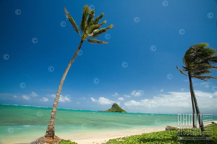 Palm lined beach with Chinaman's Hat, Kualoa Regional Park, East Side of Oahu
