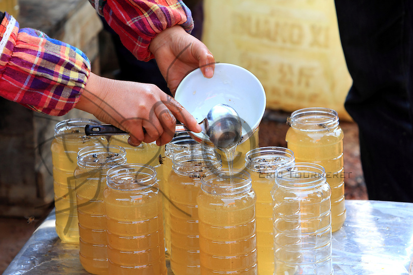 Luoping, Yunnan. Le miel est mis en pot directement après sa récolte par les apiculteurs.///Luoping, Yunnan. The beekeepers put the honey into jars immediately after harvesting it.