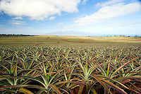 Pineapple fields on Haleakala and the West Maui Mountains in the distance, Maui, Hawaii.<br />
