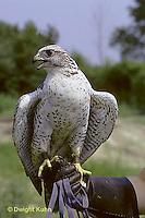 EA16-001z  Gyrfalcon - Cornell University Breeding Facility - Falco rusticulus