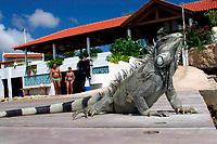 common or green iquana, Iguana iguana, on dock at dive resort, Capt. Don's habitat, Bonaire, Netherland Antilles, Caribbean Sea, Atlantic Ocean