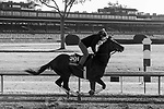 November 3, 2020: Channel Maker, trained by trainer William I. Mott, exercises in preparation for the Breeders' Cup Turf at Keeneland Racetrack in Lexington, Kentucky on November 3, 2020. Gabriella Audi/Eclipse Sportswire/Breeder's Cup/CSM