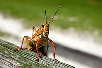 Everglades & Wetlands Critters