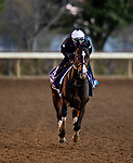 November 4, 2020:  Reinvestment Risk, trained by trainer Chad C. Brown, exercises in preparation for the Breeders' Cup Juvenile at  Keeneland Racetrack in Lexington, Kentucky on November 4, 2020. Alex Evers/Eclipse Sportswire/Breeders Cup