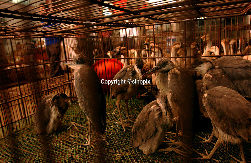 """Grey Herons are one of many wild birds sold at Lo Chun Wai (wild Animal Food) Market on the outskirts of Guangzhou, China in this file photo. China's wild animal markets, where live wild animals and reared animals are sold are the source of many viruses that mutate as they """"jump"""" from animals to humans. The coronavirus COVID-19 is thought to have originated in an animal market in China. <br /> By Sinopix Photo Agency"""