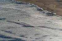 France, Gironde (33),Bassin d'Arcachon, Le banc d'Arguin ,  réseve naturelle - vue aérienne //  France, Gironde, Bassin d'Arcachon, The Banc d'Arguin, Arguin bank,- aerial view