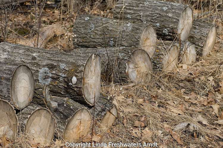 Log pile in the spring woods