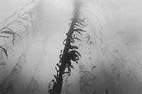 Kelp Forest, Monterey, California