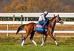 November 3, 2020: Abarta, trained by trainer Brad Cox, exercises in preparation for the Breeders' Cup Juvenile Turf at Keeneland Racetrack in Lexington, Kentucky on November 3, 2020. Alex Evers/Eclipse Sportswire/Breeders Cup