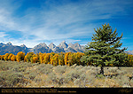 Cottonwoods, Cathedral Group, Buck Mountain, Mount Winter, South Teton, Middle Teton, Grand Teton, Mount Owen, Teewinot, Grand Teton National Park, Wyoming
