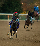 October 31, 2020: Ollie'S Candy, trained by trainer John W. Sadler, exercises in preparation for the Breeders' Cup Distaff at Keeneland Racetrack in Lexington, Kentucky on October 31, 2020. Alex Evers/Eclipse Sportswire/Breeders Cup