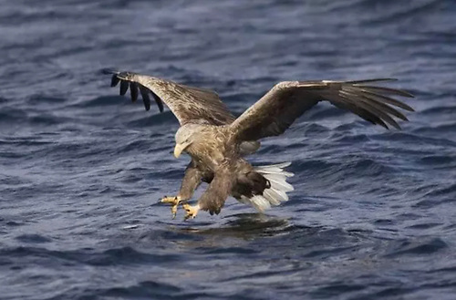 The sea eagles' nest was saved from the fire's ravages by a southeasterly wind