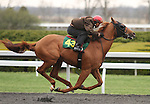 April 03, 2014: Hip 43 Broken Vow - Spelling consigned by de Meric Sales worked 1/4 in 20:4.  Candice Chavez/ESW/CSM