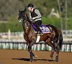 ARCADIA, CA - NOV 02: Mehronissa, owned by Rabbah Bloodstock LLC and trained by Ed Vaughan, exercises in preparation for the Breeders' Cup Turf Sprint at Santa Anita Park on November 2, 2016 in Arcadia, California. (Photo by Scott Serio/Eclipse Sportswire/Breeders Cup)