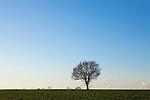 Europa, DEU, Deutschland, Nordrhein Westfalen, NRW, Rheinland, Niederrhein, Sonsbeck, Sonsbecker Schweiz, Himmel, Wolken, Baum, Kategorien und Themen, Natur, Umwelt, Landschaft, Jahreszeiten, Stimmungen, Landschaftsfotografie, Landschaften, Landschaftsphoto, Landschaftsphotographie, Wetter, Wetterelemente, Wetterlage, Wetterkunde, Witterung, Witterungsbedingungen, Wettererscheinungen, Meteorologie, Wettervorhersage<br /> <br /> [Fuer die Nutzung gelten die jeweils gueltigen Allgemeinen Liefer-und Geschaeftsbedingungen. Nutzung nur gegen Verwendungsmeldung und Nachweis. Download der AGB unter http://www.image-box.com oder werden auf Anfrage zugesendet. Freigabe ist vorher erforderlich. Jede Nutzung des Fotos ist honorarpflichtig gemaess derzeit gueltiger MFM Liste - Kontakt, Uwe Schmid-Fotografie, Duisburg, Tel. (+49).2065.677997, <br /> archiv@image-box.com, www.image-box.com]
