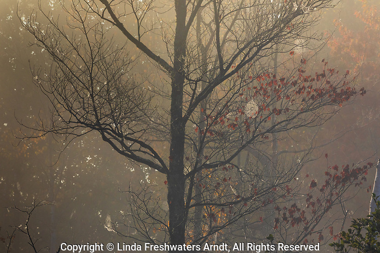A misty sunrise backlighting some spider webs in northern Wisconsin.