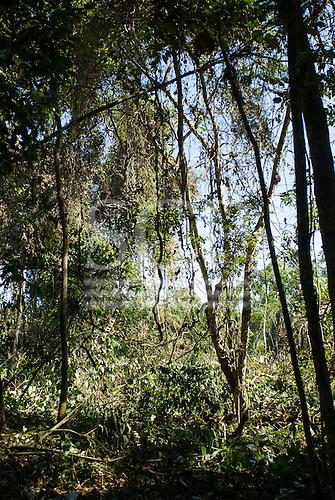 Mato Grosso State, Brazil. Aldeia Metuktire (Kayapo).