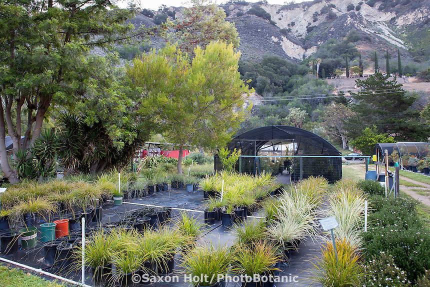 Australian Native Plant Nursery, Casitas Springs, California