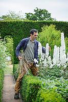 Troy Scott Smith staking White Delphiniums in the White Garden at Sissinghurst